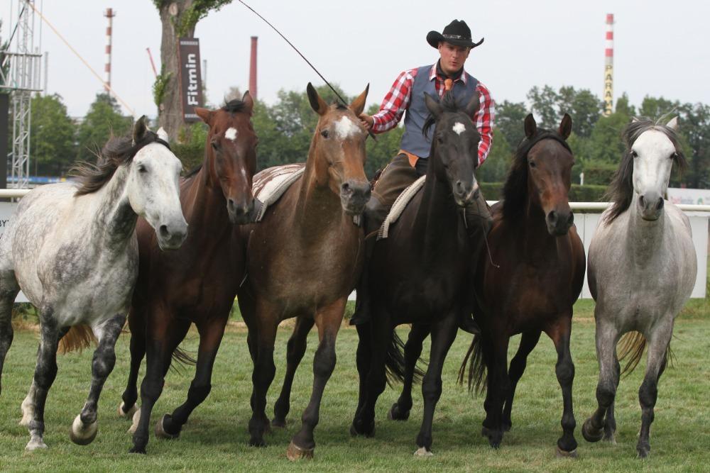 """Jednadvacátý ročník mezinárodní výstavy Koně v akci bude """"Ve jménu krále"""".Představí se na 350 koní."""