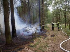 Požár lesa zřejmě založil žhář
