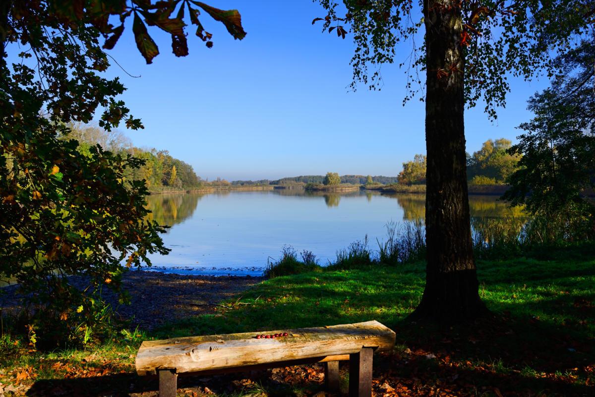 Bohdanečské rybníky