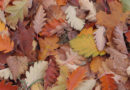 Podzimní pálení listí…