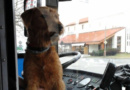 Pes odmítal vystoupit ztrolejbusu, zalíbilo se mu za volantem…