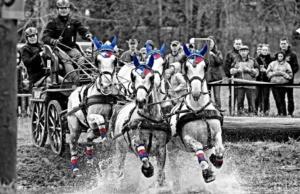 Mezinárodní závody spřežení - Rudolfův pohár @ Národní Hřebčín Kladruby   Kladruby nad Labem   Pardubický kraj   Česko