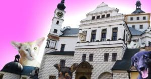 Dobročinný bazar pro Handipet Rescue ┼ diskuze ┼ koncert @ Zámecká kavárna Pardubice | Pardubice | Česko