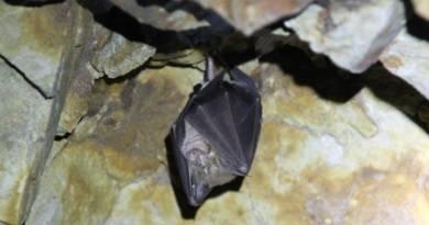 Zlí tvorové temnot, nebo neškodní roztomilí živočichové? Pravdu o netopýrech se dozvíte vpardubickém Natura parku…