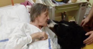 Pes Indy je pravidelným návštěvníkem léčebny dlouhodobě nemocných…