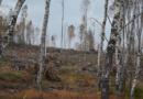 Šíření kůrovce se oproti předpokladům zpomaluje. V kraji budou letos vysázeny dva miliony sazenic stromů…
