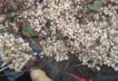 Majitelé nemovitosti nalezli zuby pod zahradní dlažbou…