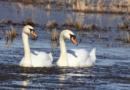 Vydejte se s ornitologem za ptáky k písníkům Oplatil a Čeperka…